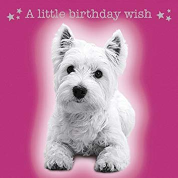 westie birthday card ; 417IQwmYxZL