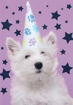 westie birthday card ; RS6554