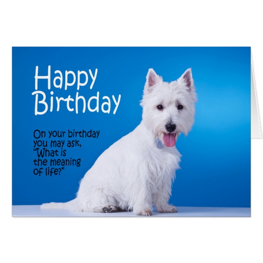 westie birthday card ; funny_westie_birthday_card-rfc3af083389b43ae82e079eba54d0e68_xvuak_8byvr_540