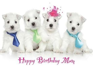 westie birthday card ; s-l300-1