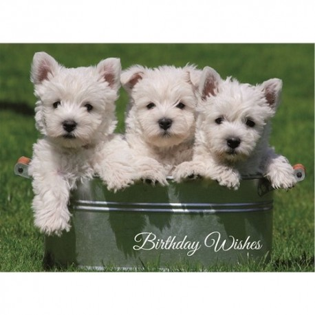 westie birthday card ; westie-puppies-birthday-card-west-highland-white-terrier
