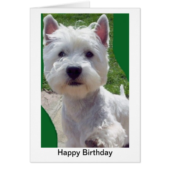 westie birthday card ; westie_birthday_card_greetings_card_paw_up_hello-r9792bc0164a54574b3195eb3f9d40176_xvuat_8byvr_540