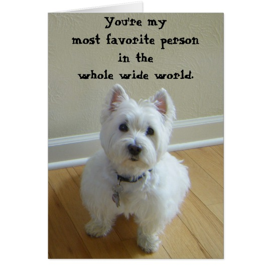 westie birthday card ; westie_most_favourite_person_greeting_card-r1be9c7e5eeef40bdb4fde56d21ebaa09_xvuat_8byvr_540