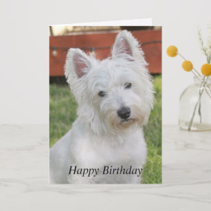westie birthday card ; westie_west_highland_terrier_dog_birthday_card-r65c3eff2e99f42f89d7720ac0f168fc6_em0cb_307